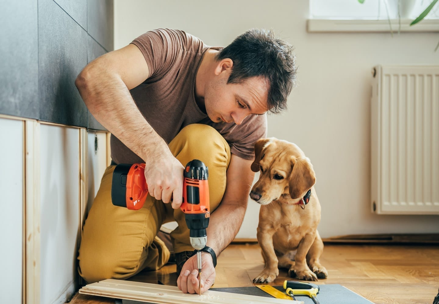 steps to remodeling a house with pet