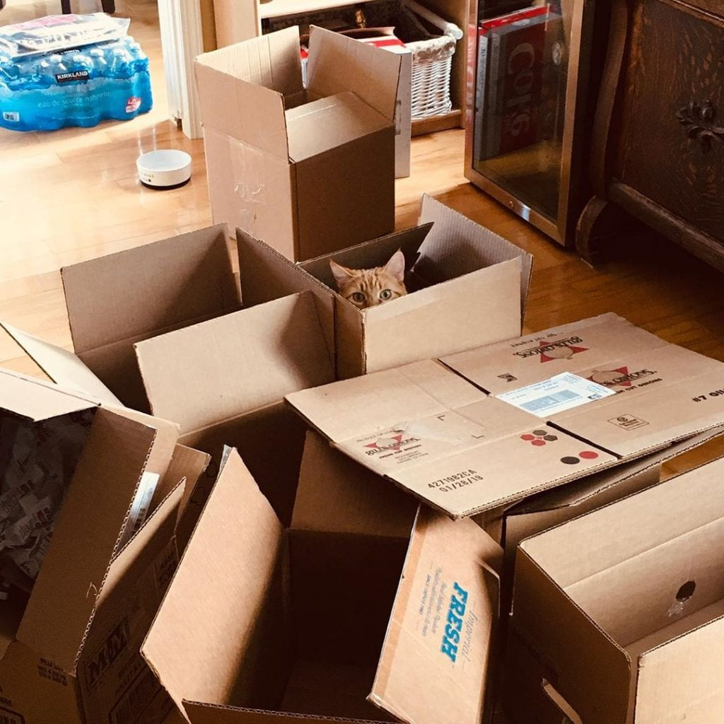 Moving boxes with cat's head poking up