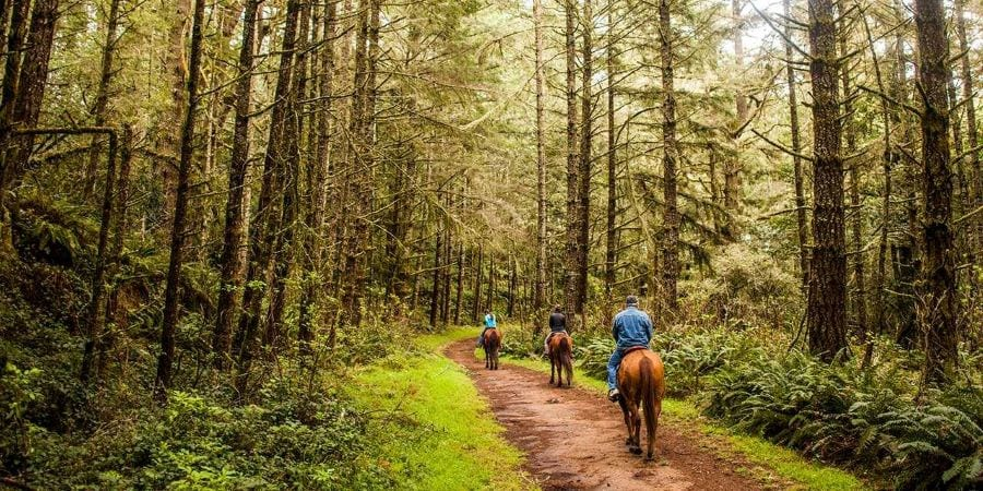 Horseback riding in California forest